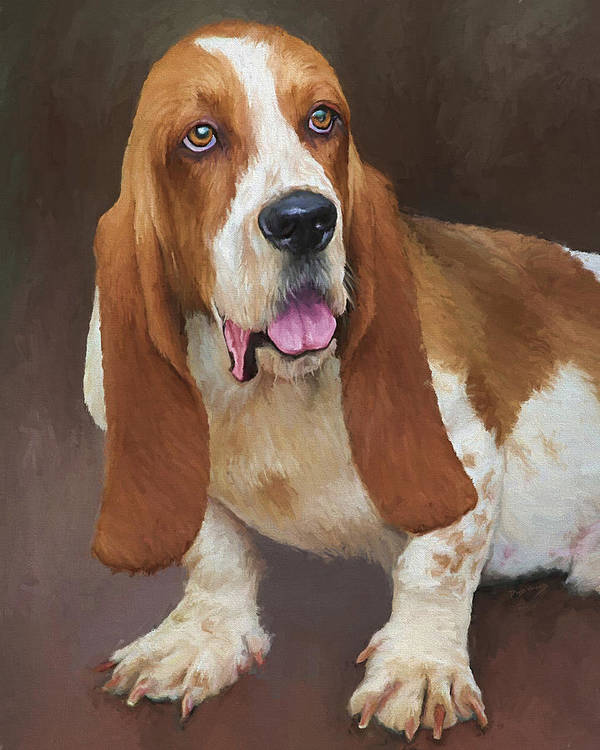Bassett Hound Poster featuring the painting Bert by David Wagner