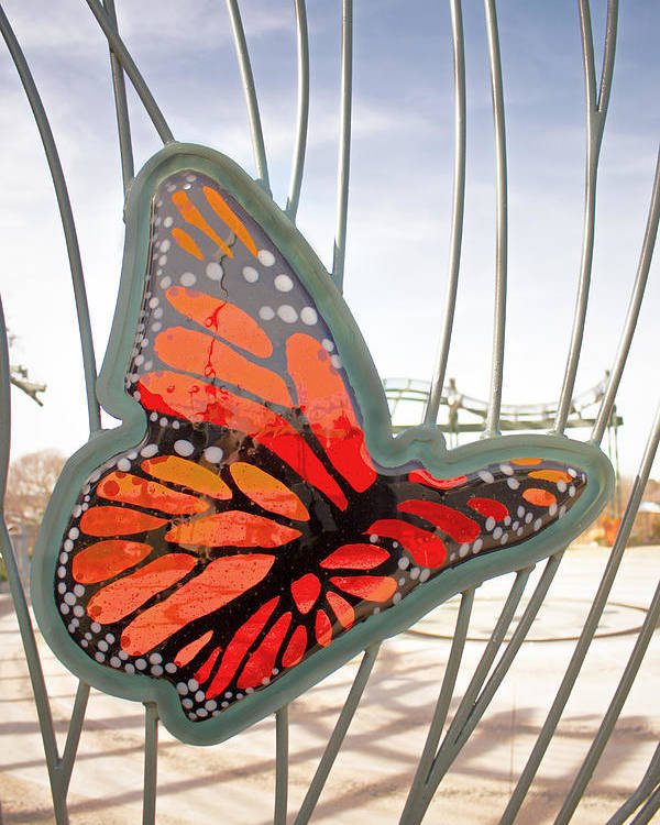 Glass Poster featuring the photograph Big Glass Butterfly In Flight by Daniel Benatar G