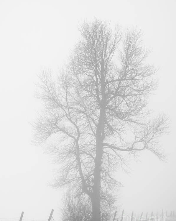 Landscapes Poster featuring the photograph Big Tree by Cheryl Baxter