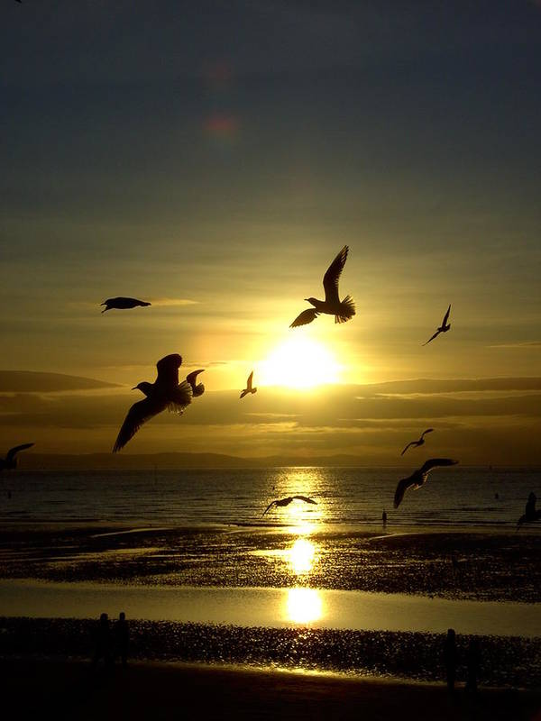Natural Poster featuring the photograph Birds Gathering At Sunset by Steve Kearns