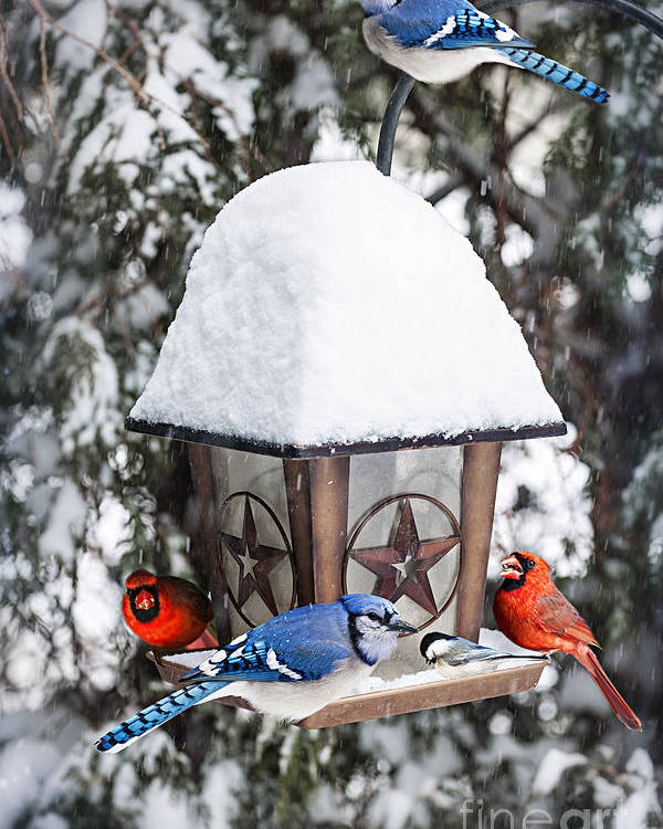 Birds Poster featuring the photograph Birds On Bird Feeder In Winter by Elena Elisseeva