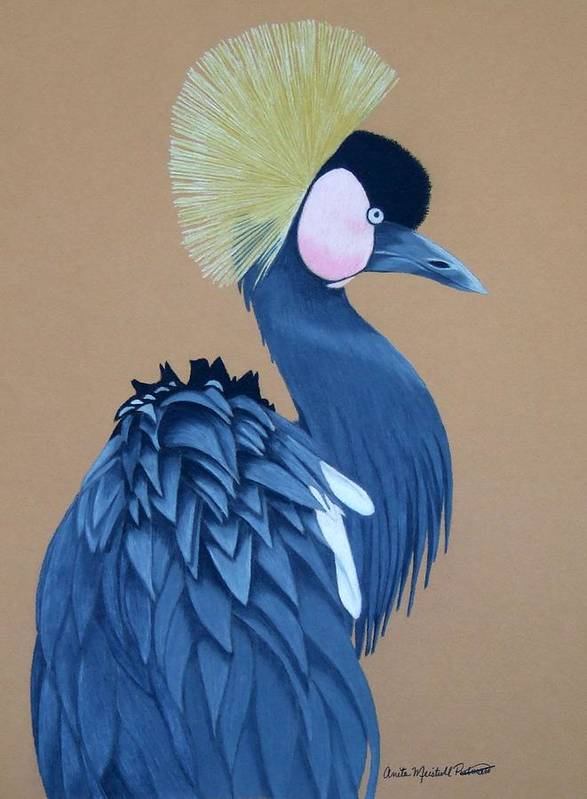 Bird Poster featuring the drawing Black-crowned Crane by Anita Putman