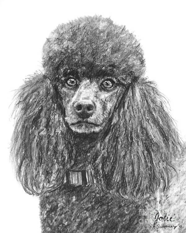 Poodle Poster featuring the drawing Black Standard Poodle Sketched In Charcoal by Kate Sumners