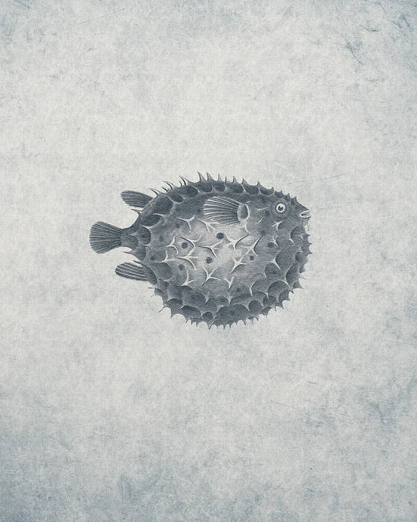 Animal Poster featuring the drawing Blowfish - Nautical Design by World Art Prints And Designs