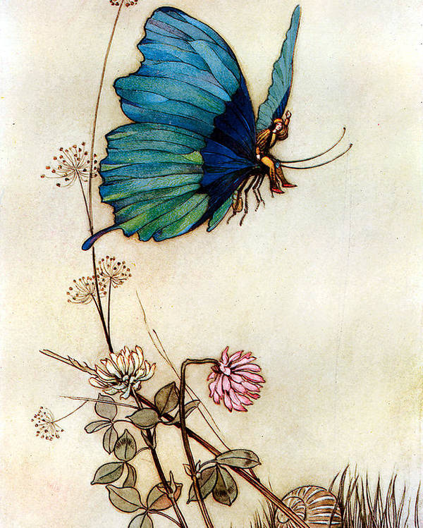 Warwick Goble Poster featuring the digital art Blue Butterfly by Warwick Goble
