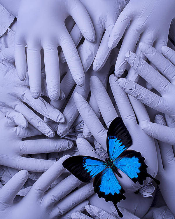 Gray Poster featuring the photograph Blue Butterfly With Gary Hands by Garry Gay