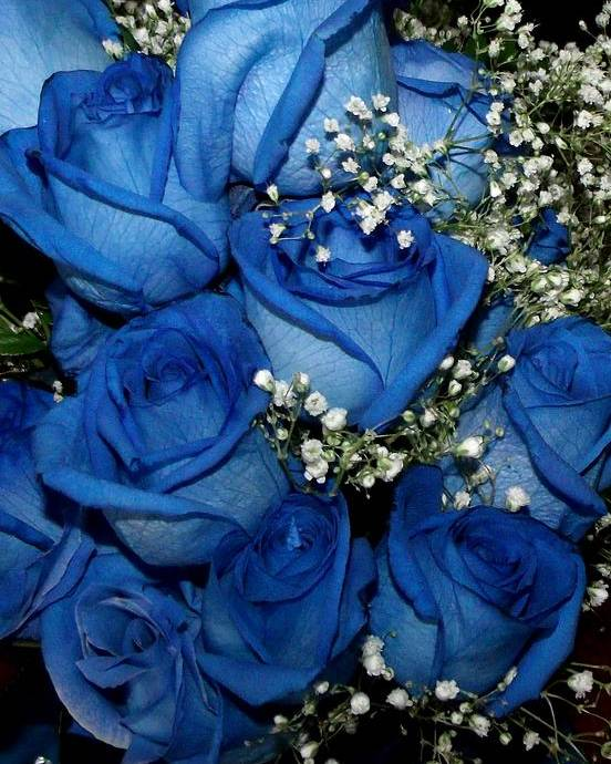 Blue Rose Poster featuring the photograph Blue Fire And Ice Roses by Gail Matthews