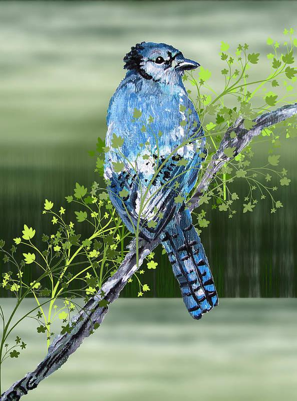 Bluejay Poster featuring the digital art Blue Jay Mixed Media by Barbara Giordano