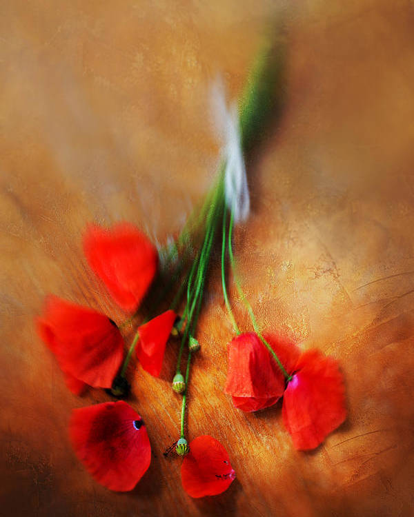 Bouquet Poster featuring the photograph Bouquet Of Red Poppies And White Ribbon by Jaroslaw Blaminsky