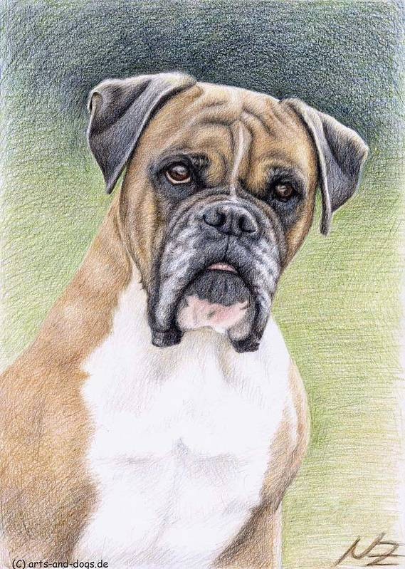 Dog Poster featuring the drawing Boxer Portrait by Nicole Zeug