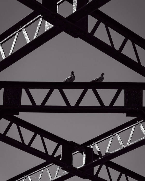 Pigeon Poster featuring the photograph Bridge Abstract by Bob Orsillo