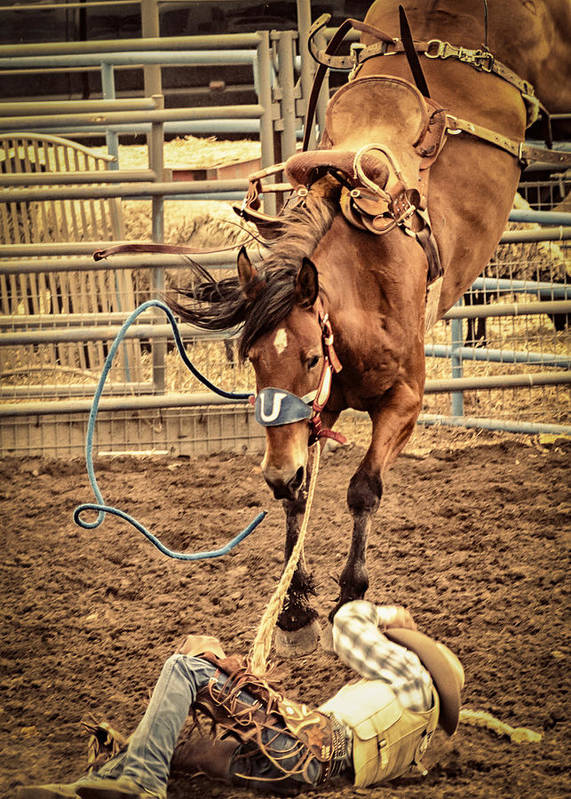 Rodeo Poster featuring the photograph Bucking by Caitlyn Grasso