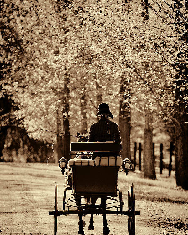 Flatlandsfoto Poster featuring the photograph Buggy Ride by Joan Davis