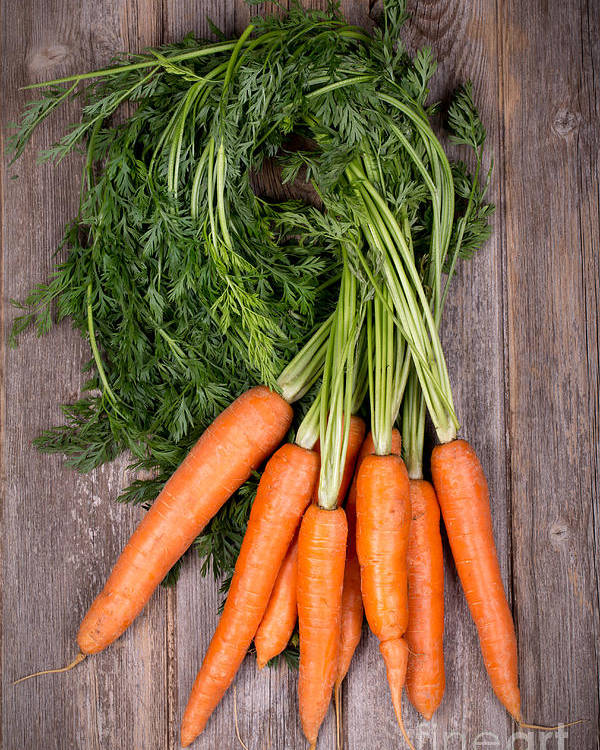Agriculture Poster featuring the photograph Bunched Carrots by Jane Rix