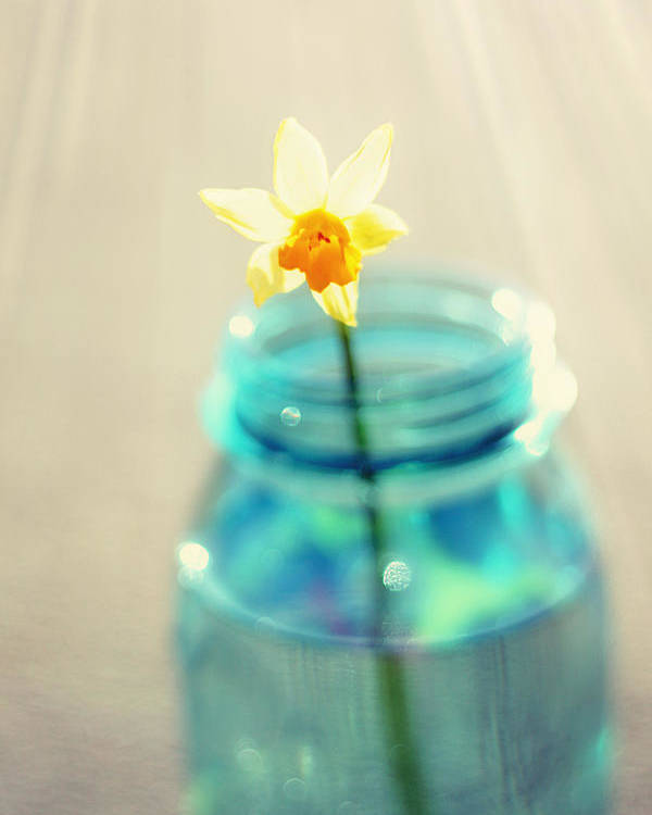 Buttercup Poster featuring the photograph Buttercup Photography - Flower In A Mason Jar - Daffodil Photography - Aqua Blue Yellow Wall Art by Amy Tyler