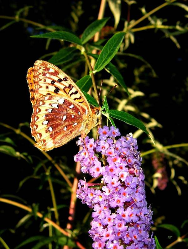 Butterfly Poster featuring the photograph Butterfly Banquet 2 by Will Borden