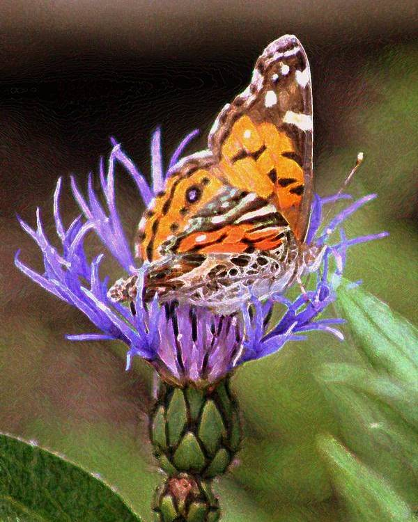 Flower Poster featuring the photograph Butterfly by Fran James
