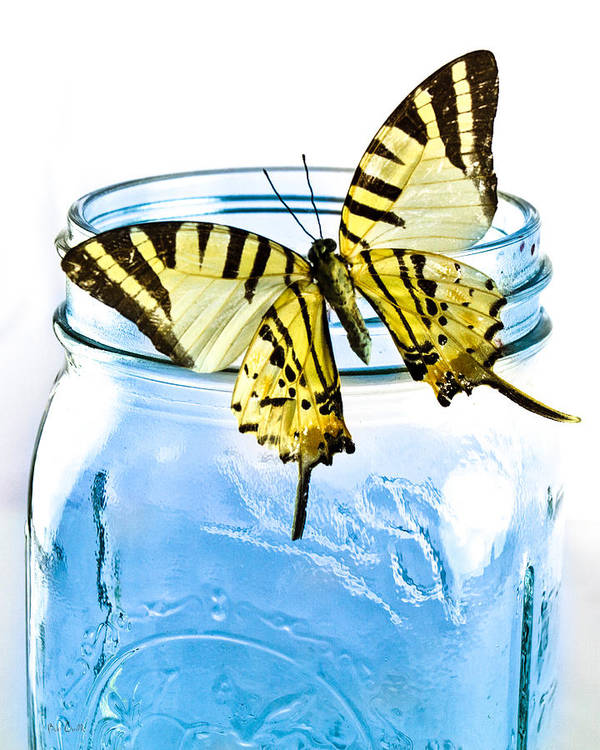 Nature Poster featuring the photograph Butterfly On A Blue Jar by Bob Orsillo
