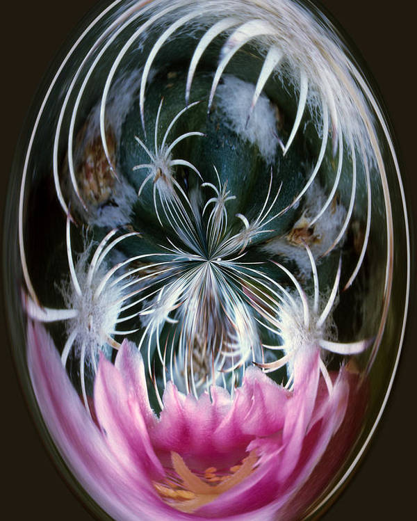 Abstract Poster featuring the photograph Cactus Flower Abstract by Keith Gondron