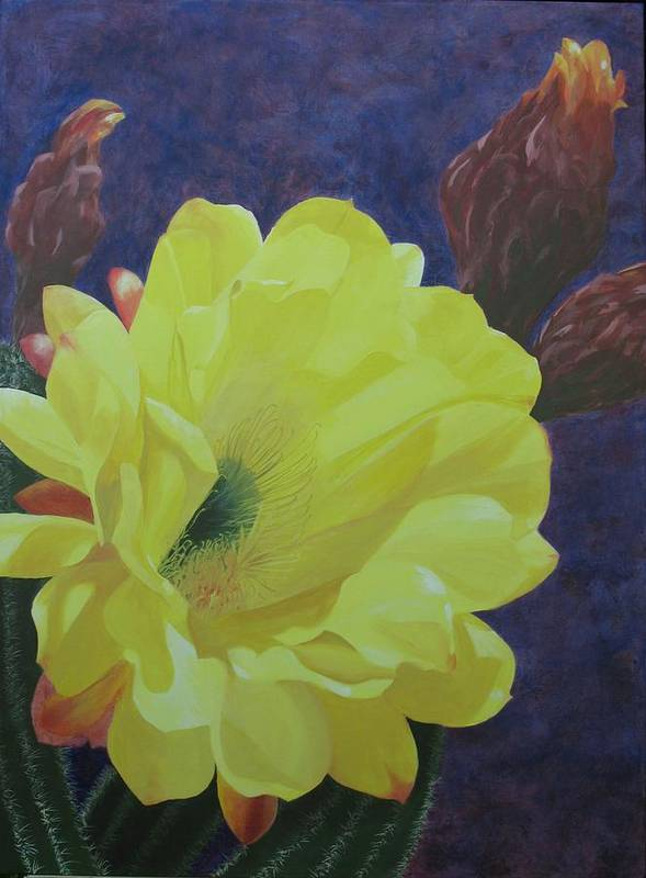 Argentine Cactus Bloom Poster featuring the painting Cactus Morning by Janis Mock-Jones