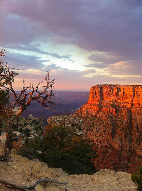 America Poster featuring the photograph Canyon Rim Tree by Heidi Smith