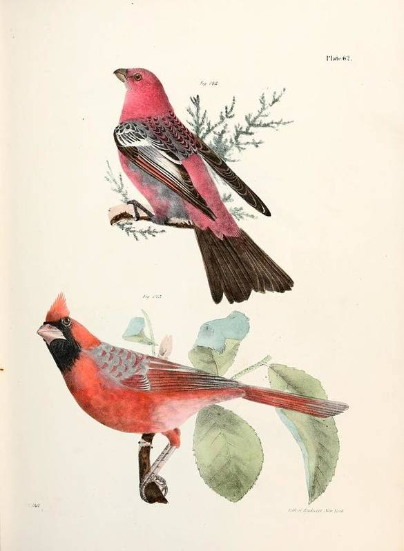 Cardinals Poster featuring the painting Cardinals by Philip Ralley