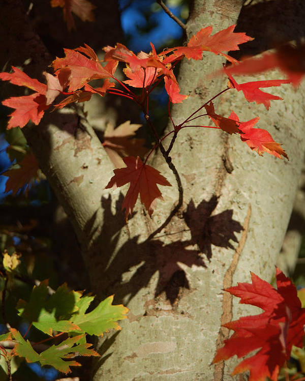 Autumn Poster featuring the photograph Carolina Autumn by Suzanne Gaff