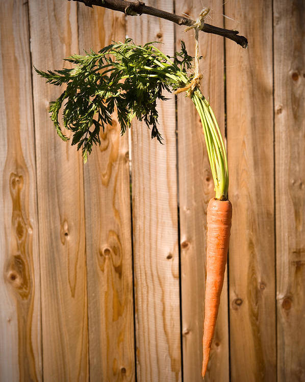 Carrot Poster featuring the photograph Carrot On A Stick by Joe Belanger
