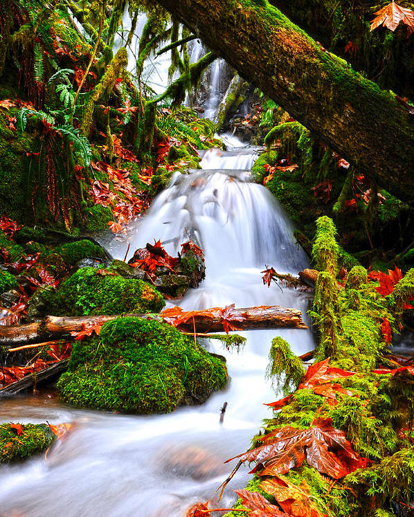 #nature Poster featuring the photograph Cascade Creek by Randy Giesbrecht