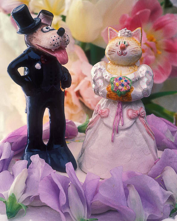 Cat Poster featuring the photograph Cat And Dog Bride And Groom by Garry Gay