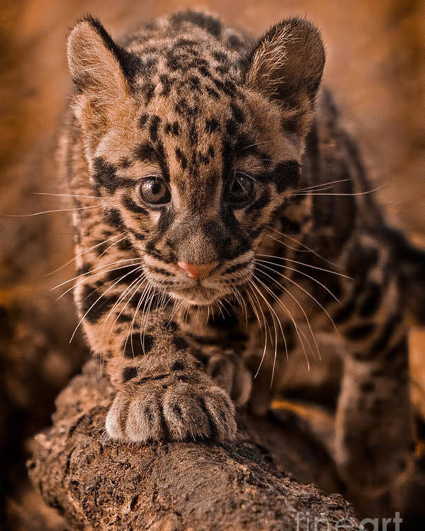Adorable Poster featuring the photograph Cautious Advance by Ashley Vincent