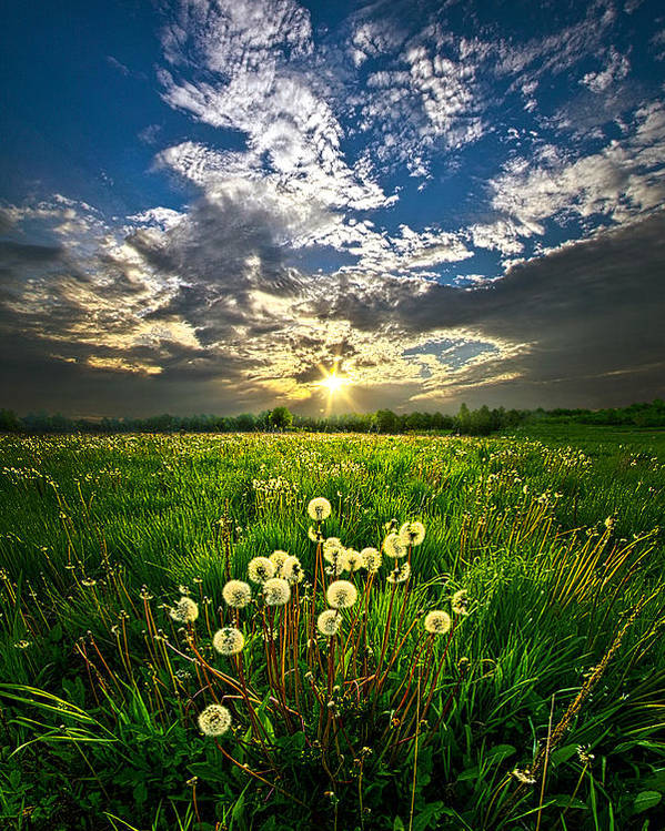 Dandelion Poster featuring the photograph Change Of Season by Phil Koch