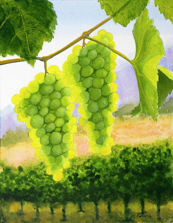Chardonnay Poster featuring the painting Chardonnay Grapes by Mike Robles