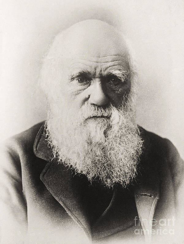 Beard Poster featuring the photograph Charles Darwin by English School