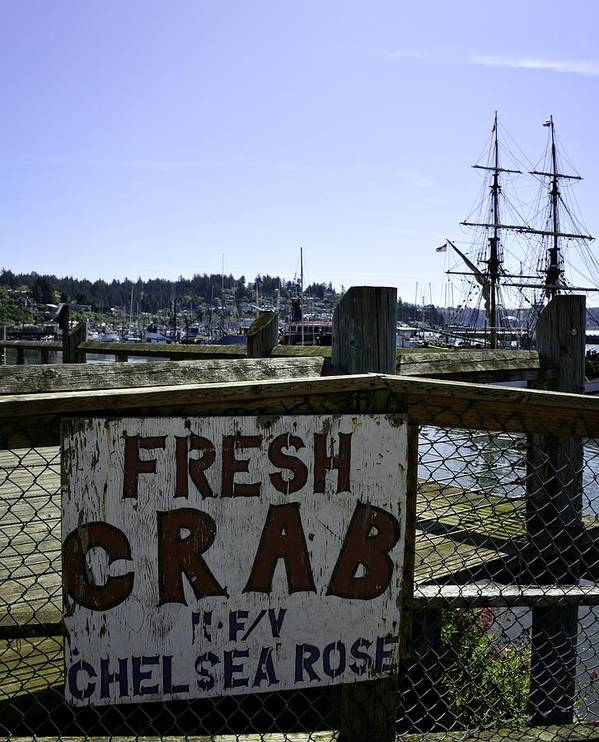 Newport Poster featuring the photograph Chelsea Rose Crab by Image Takers Photography LLC - Carol Haddon
