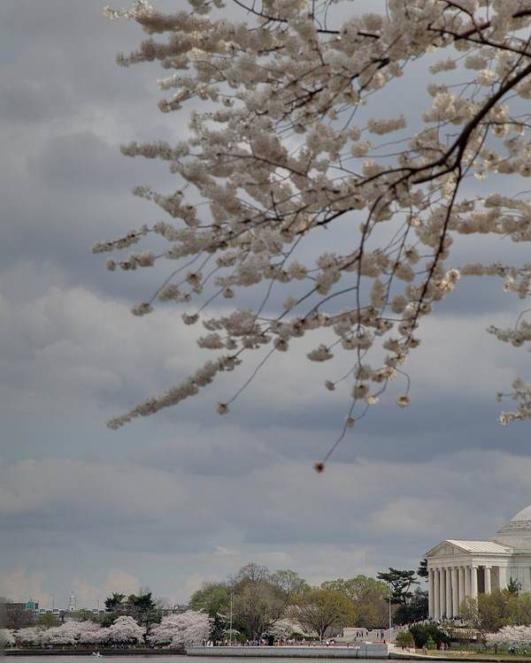 America Poster featuring the photograph Cherry Blossoms With Jefferson Memorial - Washington Dc - 011312 by DC Photographer