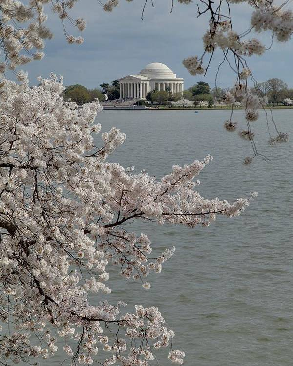 America Poster featuring the photograph Cherry Blossoms With Jefferson Memorial - Washington Dc - 011321 by DC Photographer