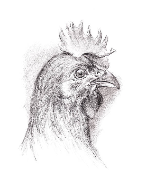 Chicken Poster featuring the drawing Chicken Portrait In Charcoal by MM Anderson