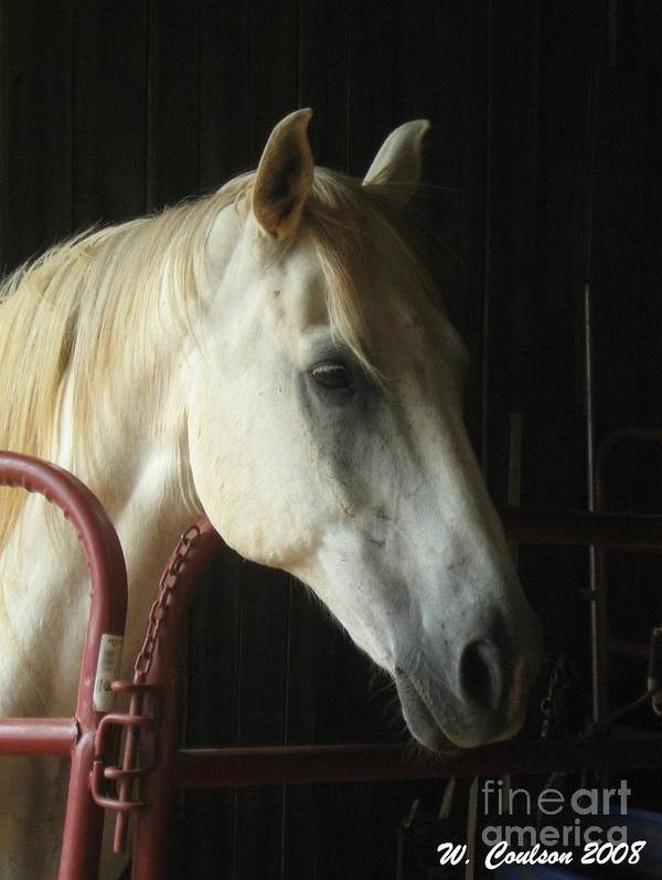 Horse Poster featuring the photograph Choomook by Wendy Coulson