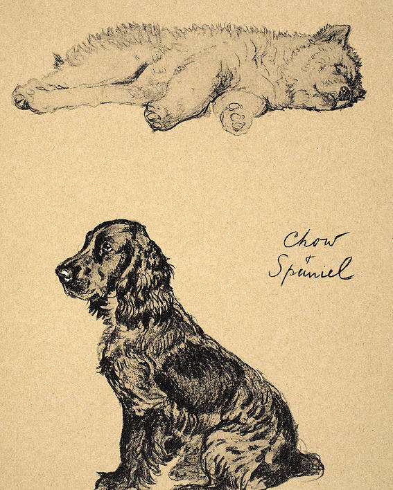 Dog Poster featuring the drawing Chow And Spaniel, 1930, Illustrations by Cecil Charles Windsor Aldin