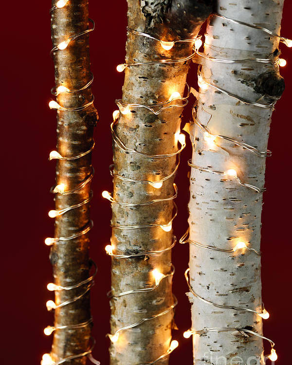 Christmas Poster featuring the photograph Christmas Lights On Birch Branches by Elena Elisseeva
