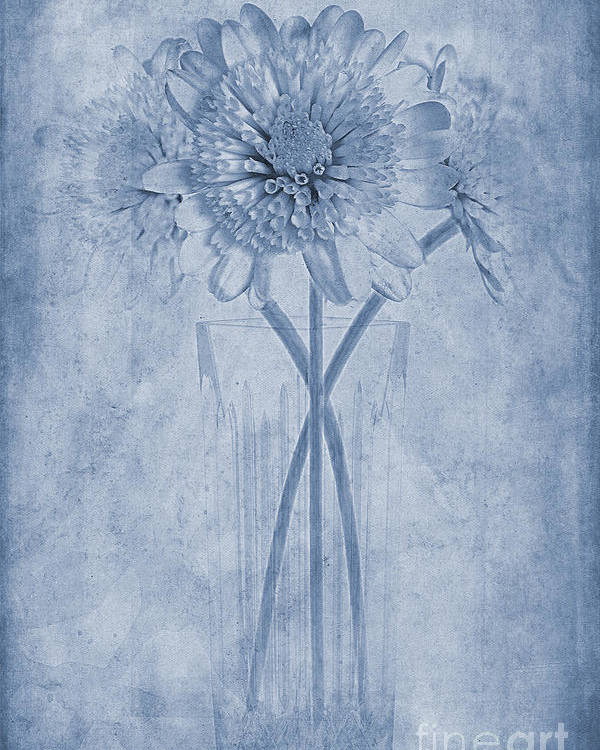 Chrysanthemum Poster featuring the photograph Chrysanthemum Cyanotype by John Edwards