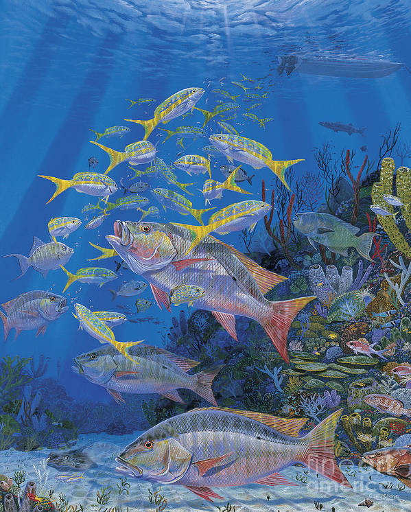 Mutton Snapper Poster featuring the painting Chum Line Re0013 by Carey Chen