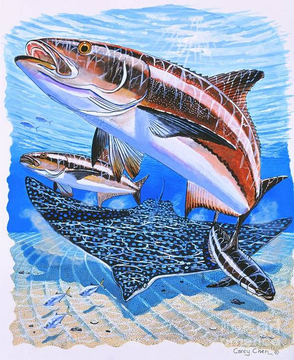 Cobia Poster featuring the painting Cobia On Rays by Carey Chen