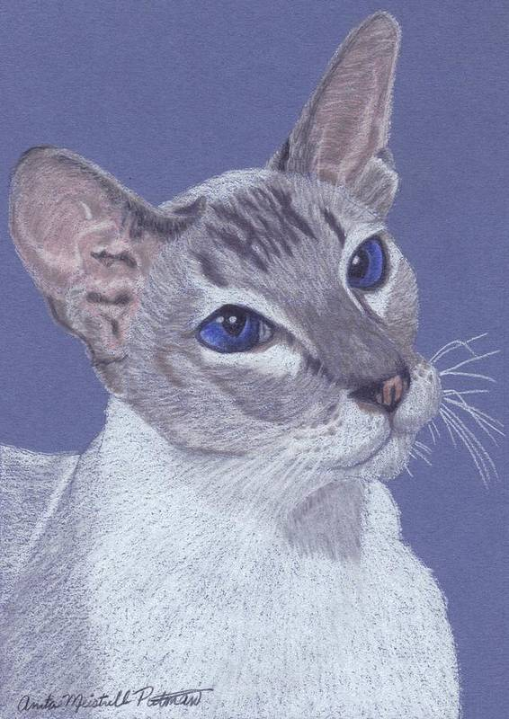Cat Poster featuring the painting Colorpoint Vignette by Anita Putman