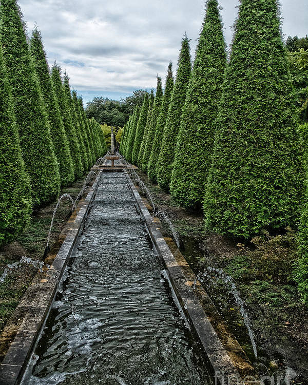 Conifer Water Feature Poster featuring the photograph Conifer Lined Water Feature by Brothers Beerens