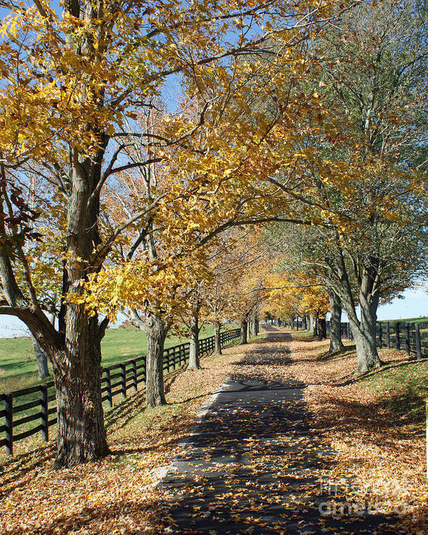 Horse Farms Poster featuring the photograph Country Lane by Roger Potts