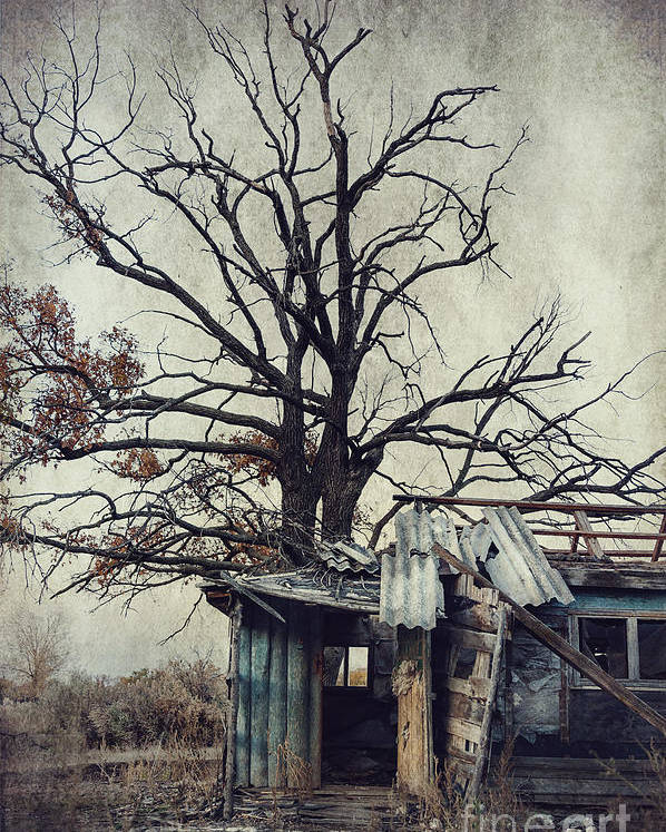 Abandoned Poster featuring the photograph Decay Barn by Svetlana Sewell