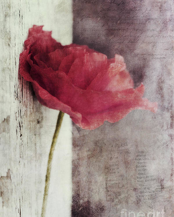 Poppy Poster featuring the photograph Decor Poppy by Priska Wettstein