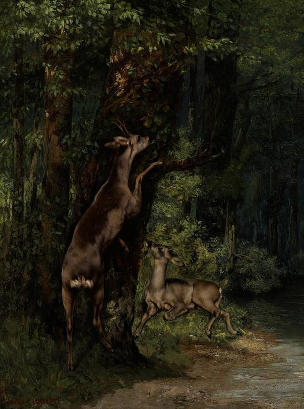 Deer; Animal; Animals; Forest; Wood; Woods; Woodland; Wooded; Trees; Tree; Eating; Reaching; Wild; Realist Poster featuring the painting Deer In The Forest by Gustave Courbet